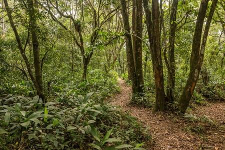 botao_trilha entre as aldeias.jpg